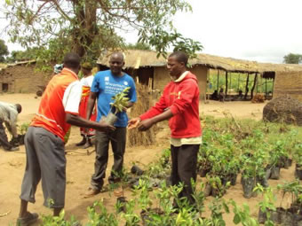 Planting trees in Malawi